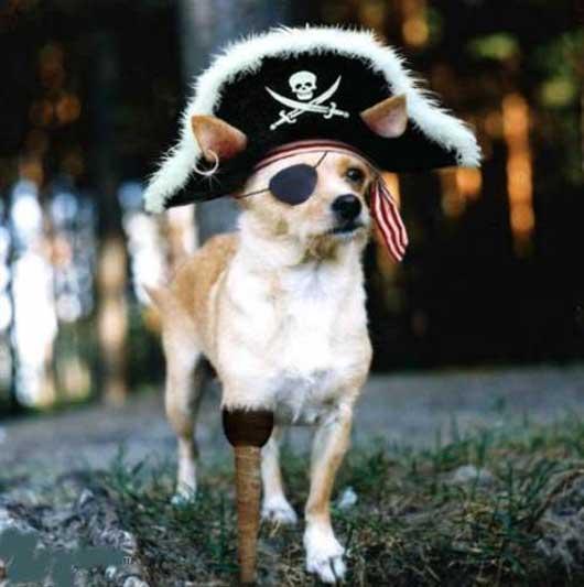pirate_dog_01.jpg