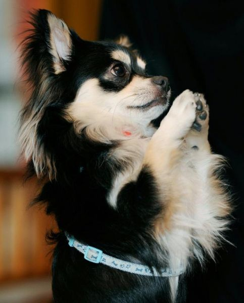 praying_dog_02.jpg