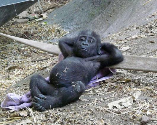 Little Gorilla Puzzle