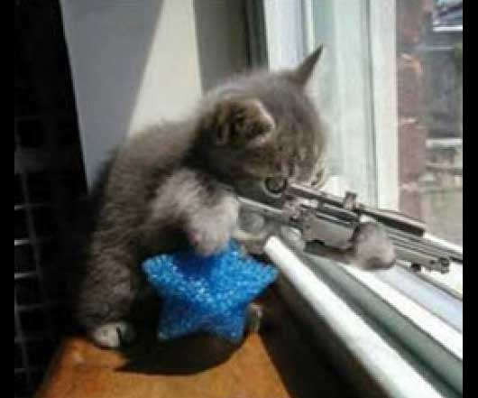 Sniper Kitty The FlashGame